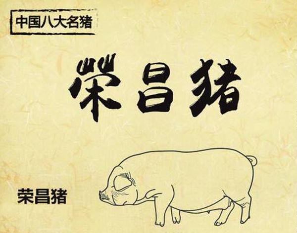 """""""荣昌猪,科技猪"""" 领跑全国生猪养殖"""