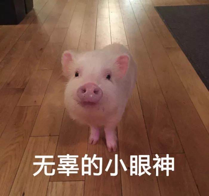 猪肉价格持续上涨?咋整